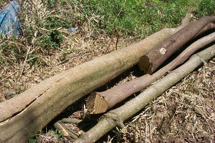 wpid-mokuzai0506-2004-12-2-21-21.jpg